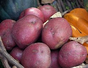 resistant starch in red potatoes